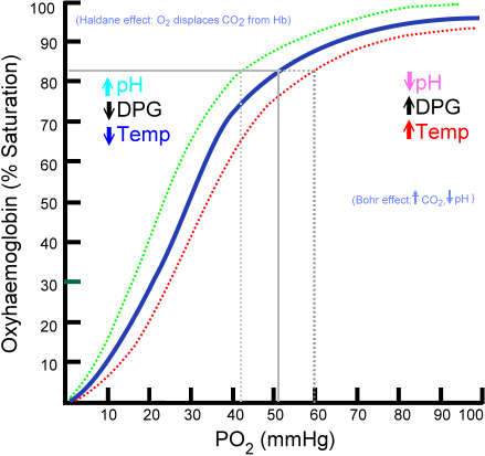 Hemoglobin Dissociation Curve. Oxygen has lower affinity for hemoglobin as temperature increases.